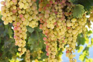Vin bio sans sulfite